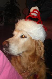 a four-legged santa