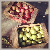 2:43pm--picking up my share of apples and pears from Adam's Pantry. #soexcited #organicproduce