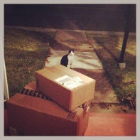 9:43pm--just discovered these packages on the porch...and a creepy kitty guarding them. guess that's what happens when you always use the back door...and have a lot of neighborhood cats. #YayFunMail